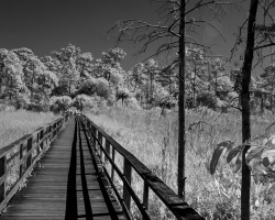 Corkscrew boardwalk