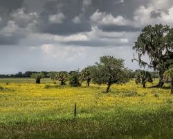 Myakka Prairie spring bloom