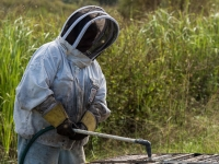 Florida Bee Keepers